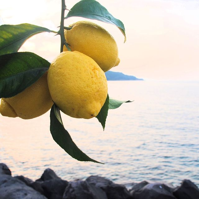 Lemons are one of the symbols of Sorrento. ? Are you ready to taste their aroma in a sip of limoncello? ?? @sapori_e_colori_sorrento *#enjoythecoast #sorrento #limoncello #instasorrento #sorrentocoast #best_sorrentocoast #costierasorrentina #positanoamalficoast #igersitalia #italy_vacations #traveltheworld #italytrip #bestplacesmagazine #earthpix #awesome_earthpix #bestitaliansites #bay #beach #lemons